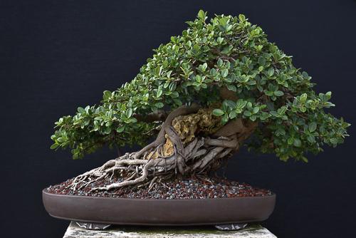 green island root over rock