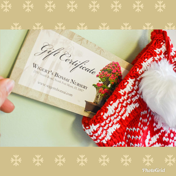 WIgerts Bonsai Holiday Gift Cards